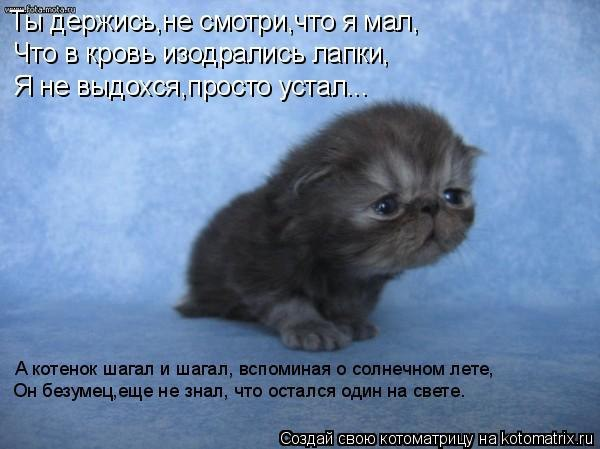 Стих про грустного котёнка
