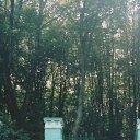 Тисосамшитовая роща (Сочи, Хоста)