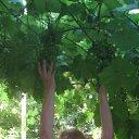 Фото Елена, Омск, 58 лет - добавлено 30 августа 2011
