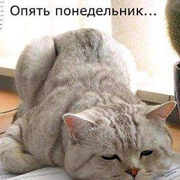 Елена, Иваново, 44 года