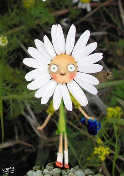Смешная картинка ромашка