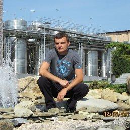 Андрей, 37 лет, Шабо