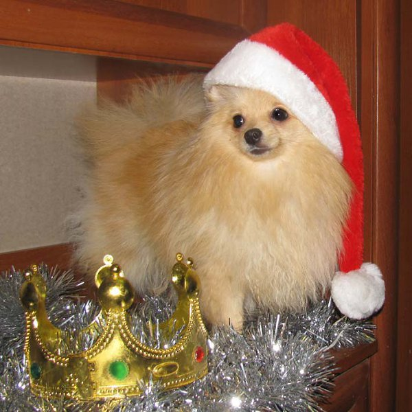 Фото подарка на Новый год: И много много радости, детишкам принесла :))) - КПП, Ташкент