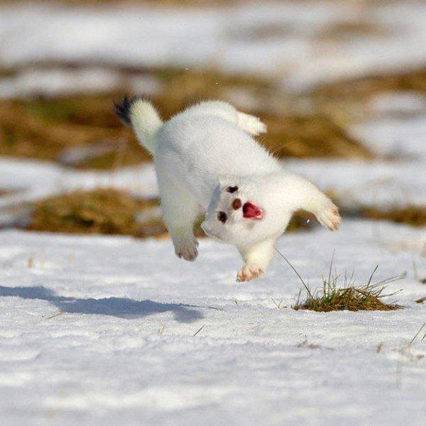 глюкозы крахмала весенние танцы животных картинки создания моделей часто