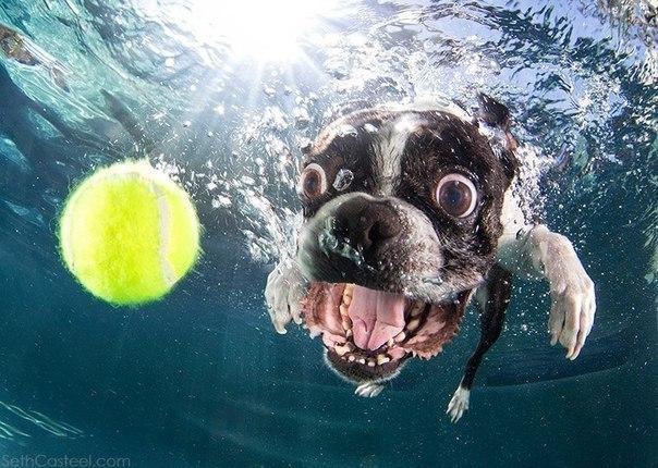 Уморительные морды ныряющих собак - 5
