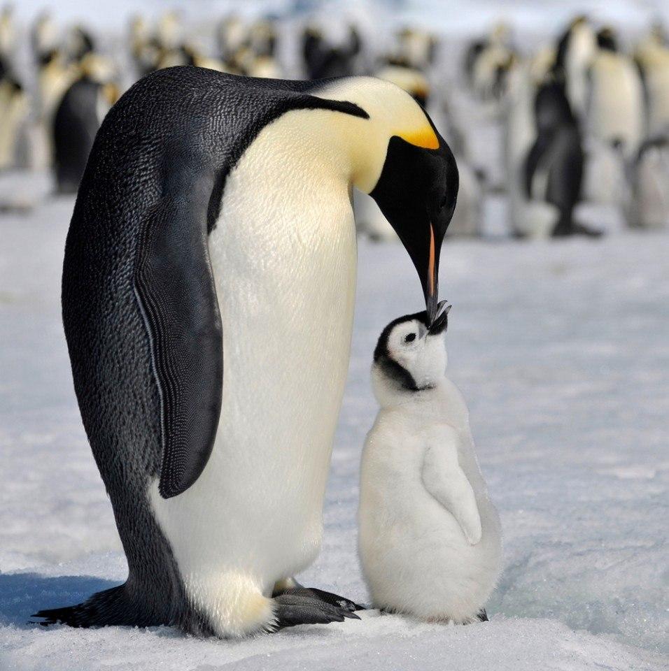 сказать картинки про человека пингвина предложений планам учреждения