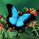 Фото Farida, Ижевск - добавлено 29 июля 2014 в альбом «мир насекомых»