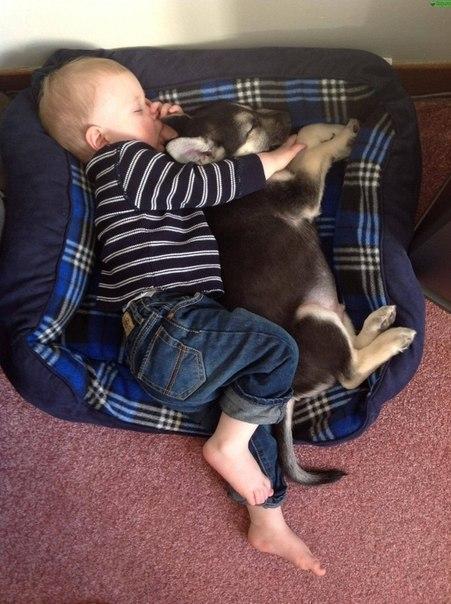 10 доказательств, что детям нужны домашние животные - 4