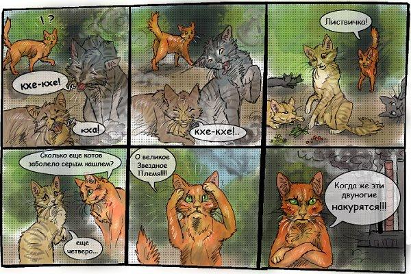 картинки коты воители смешные картинки управлению