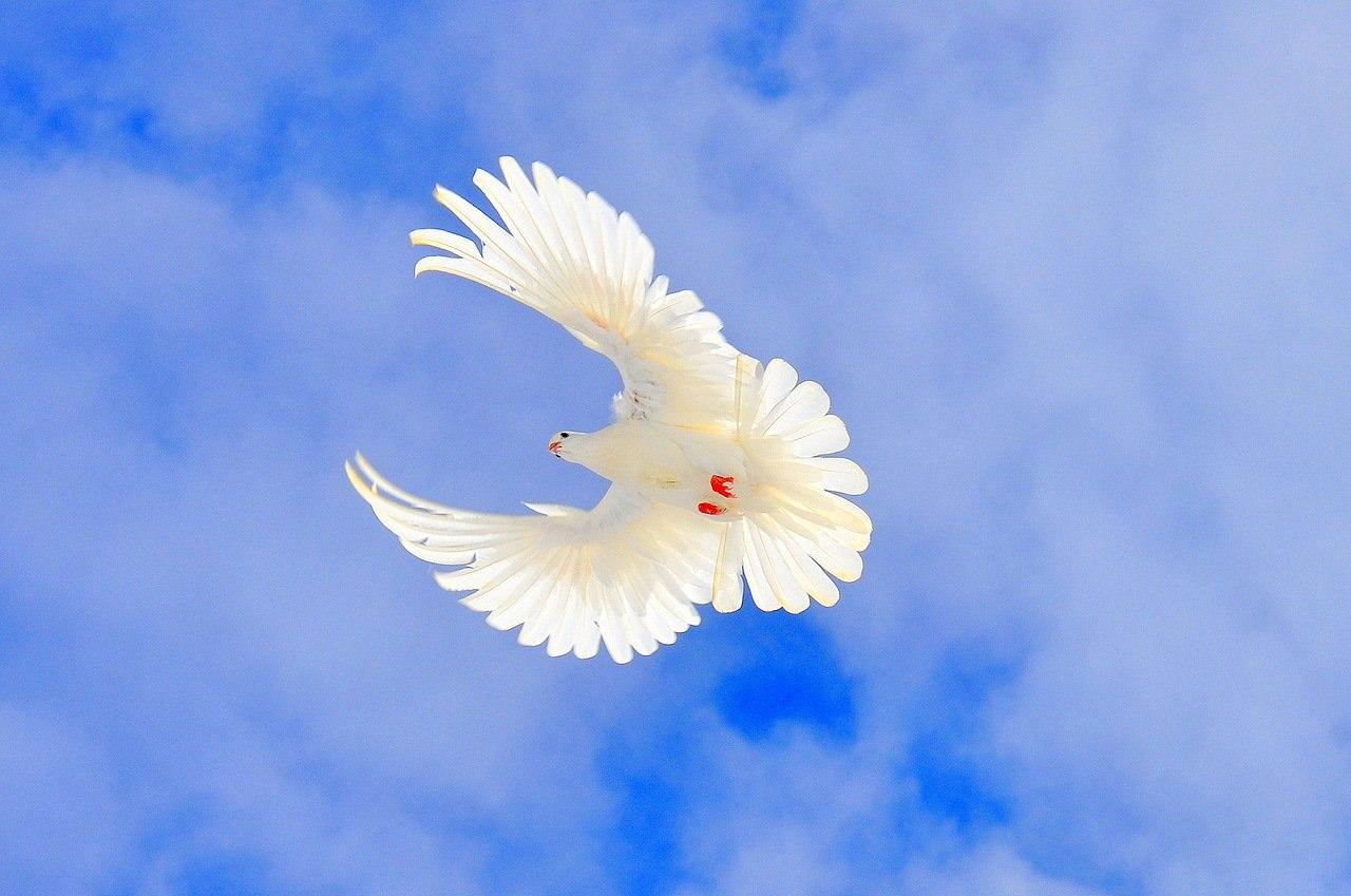 Открытки голубь в небе