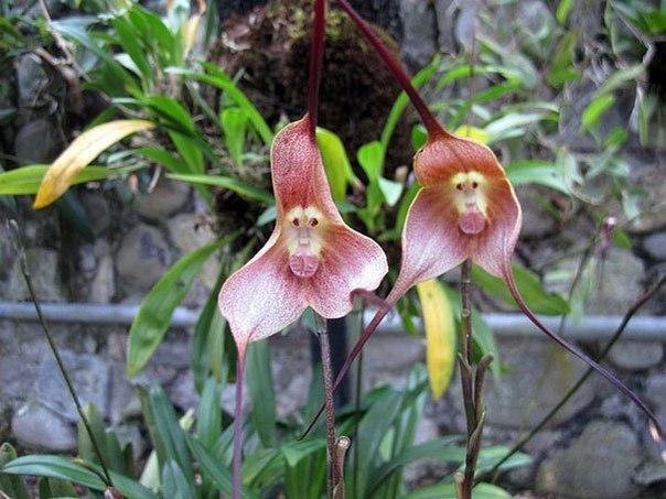 Необычные цветы , которые похожи на что-то другое - 2