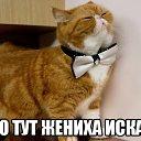 Фото Светлана, Санкт-Петербург, 57 лет - добавлено 4 октября 2014 в альбом «Лента новостей»