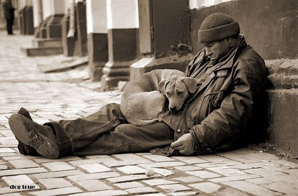 Никогда не суди с первого взгляда ни о собаке, ни о человеке. Потому что и дворняга может иметь ...