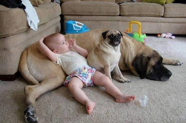 10 доказательств, что детям нужны домашние животные - 8