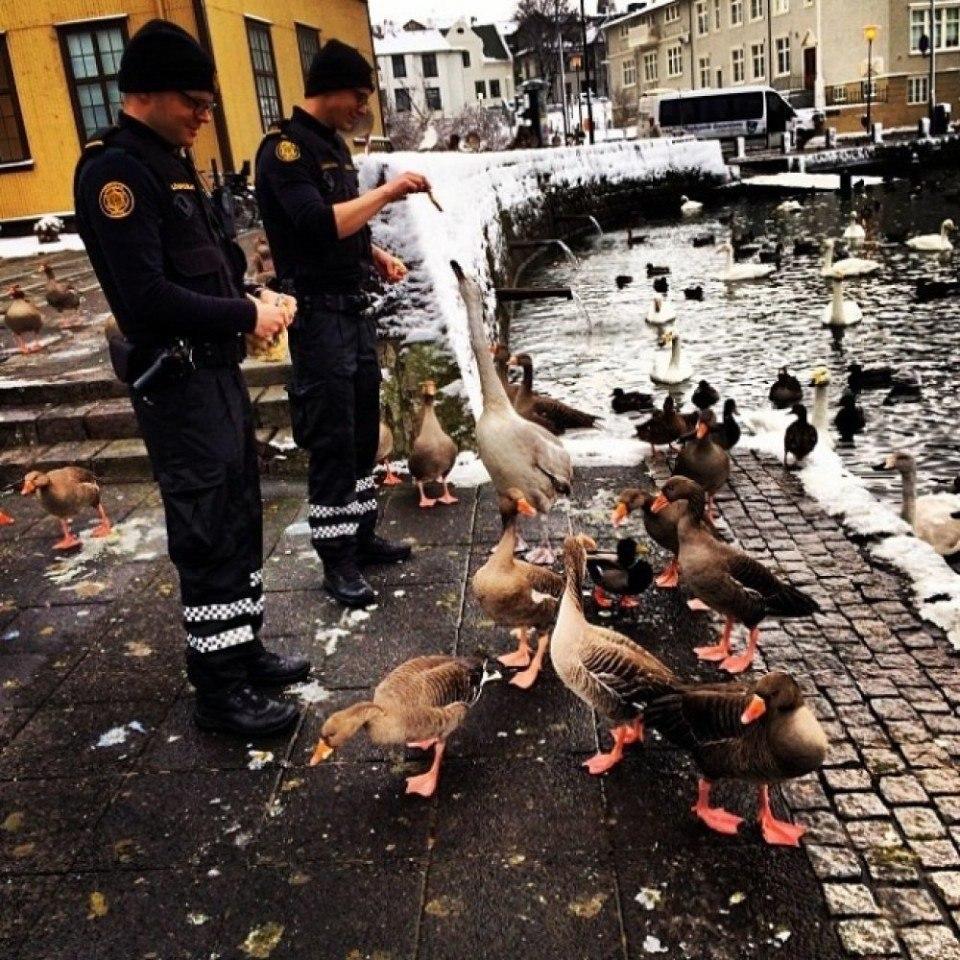 Официальный инстаграм исландской полиции - 8