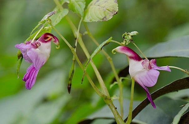 Необычные цветы , которые похожи на что-то другое - 5