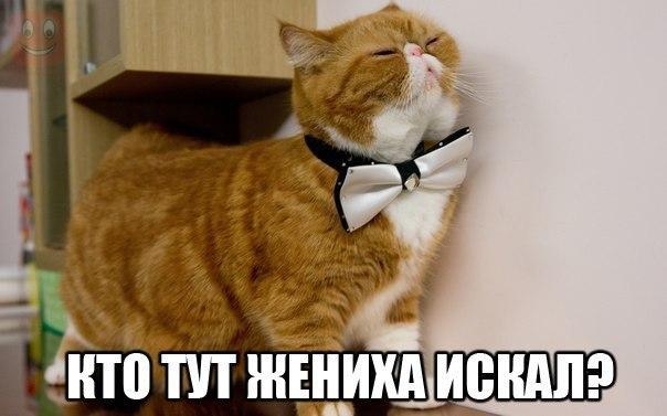 Светлана - 4 октября 2014 в 12:30