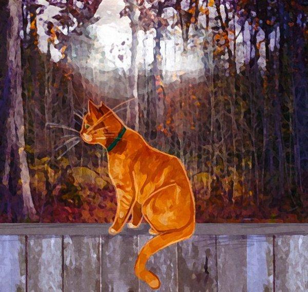 Коты-Воители. Знамение Звёзд | 570x600
