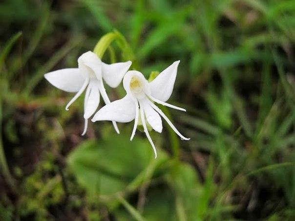 Необычные цветы , которые похожи на что-то другое - 6