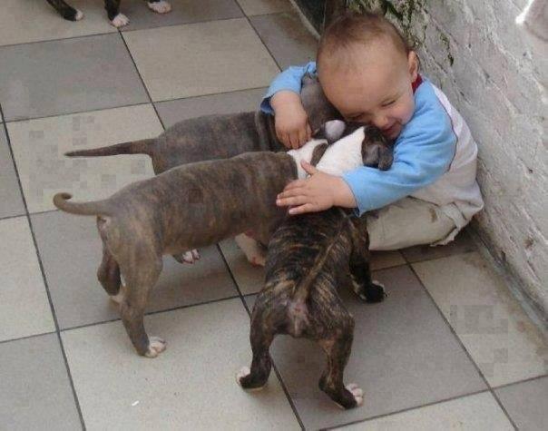 10 доказательств, что детям нужны домашние животные - 6