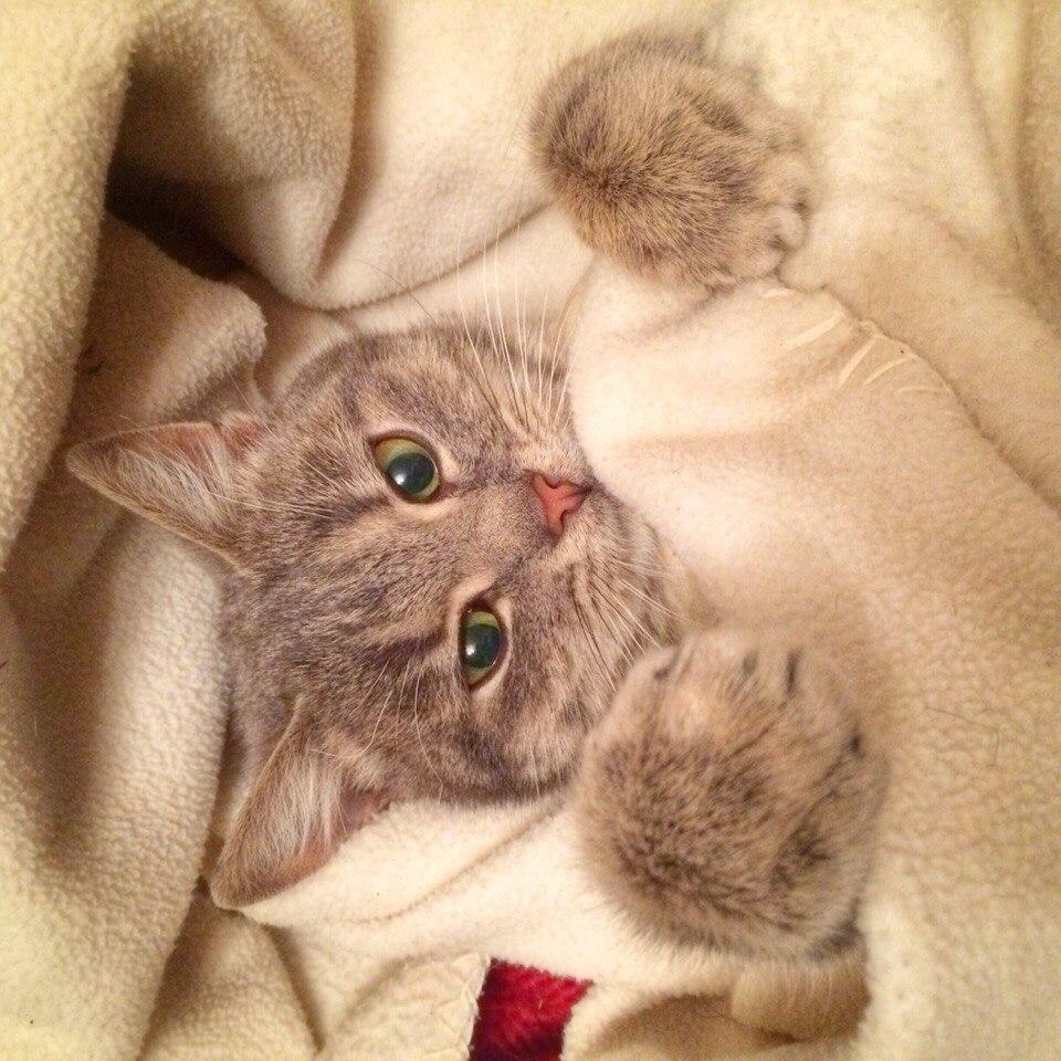 Прикольные картинки с котятами спокойной ночи