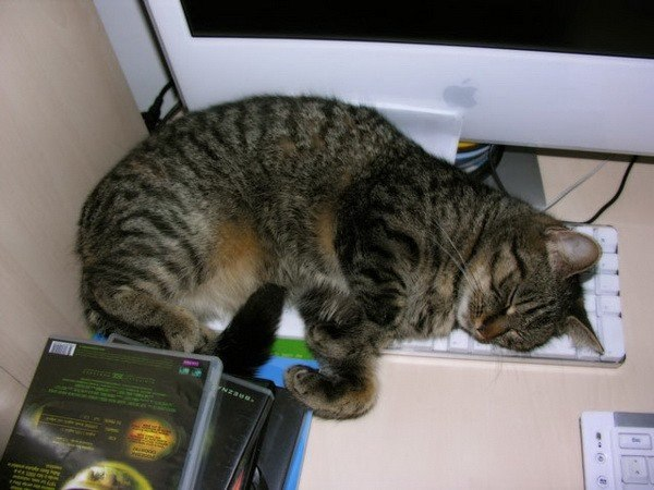 Котейки с клавиатурами - 4
