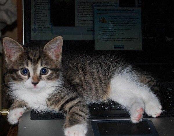 Котейки с клавиатурами - 9