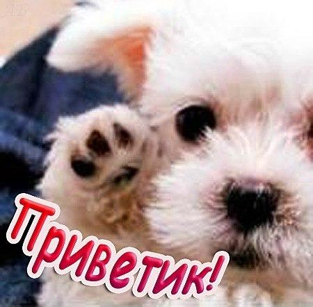 Восхитительного, фото собаки с надписью привет