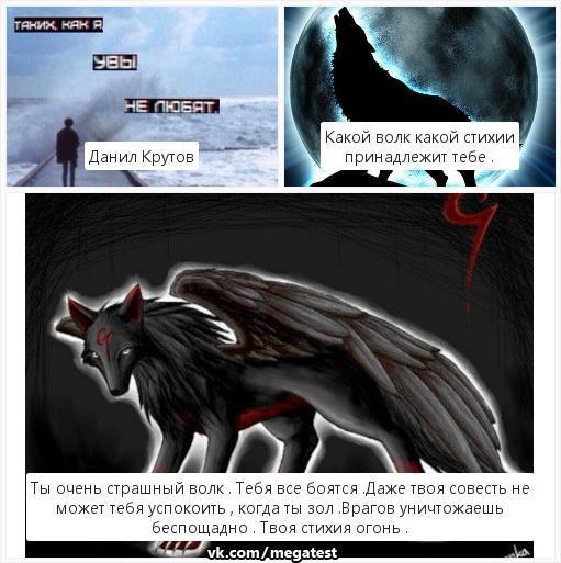 тесты про волков в картинках все фото