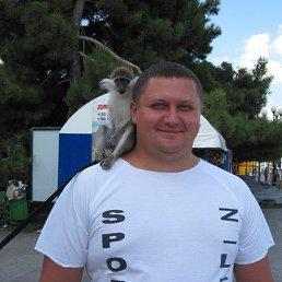 Владислав, 34 года, Курск