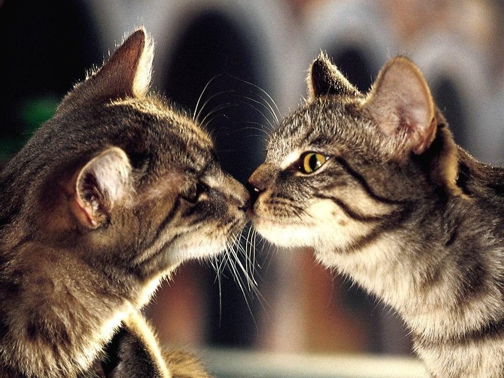 Картинки с котиками с любовью