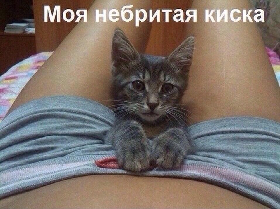третьи, котика если показывает пизду свою фото посмотрим красивую пизду