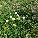 Фото Анютка, Жезказган - добавлено 26 сентября 2015