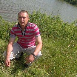 Владимир, 34 года, Дмитриев-Льговский