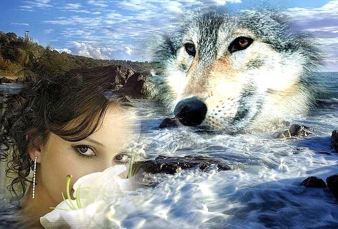 Цветы день, одинокая волчица картинки