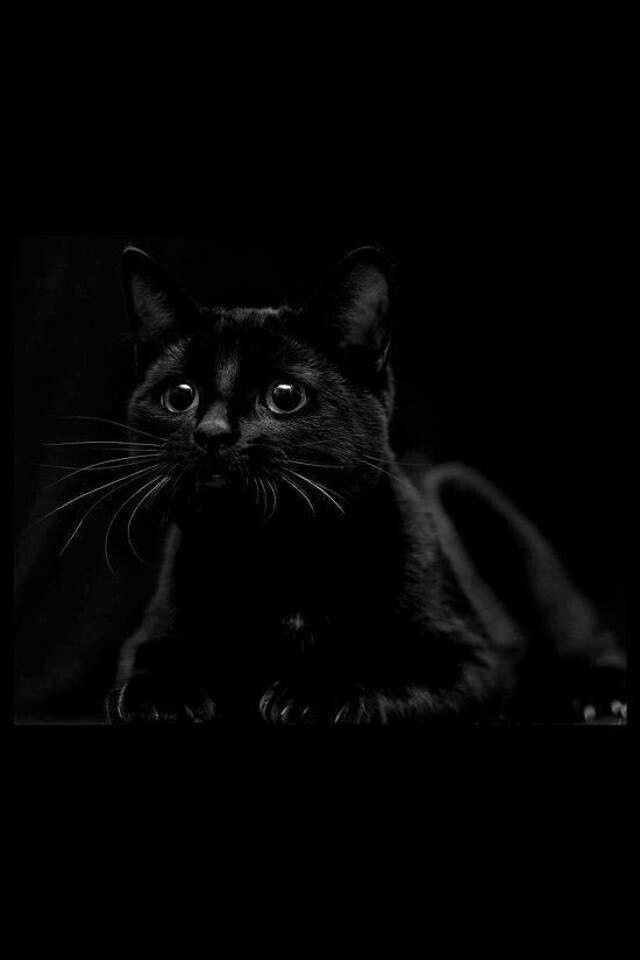 картинки для телефона черный кот новые бампер рено