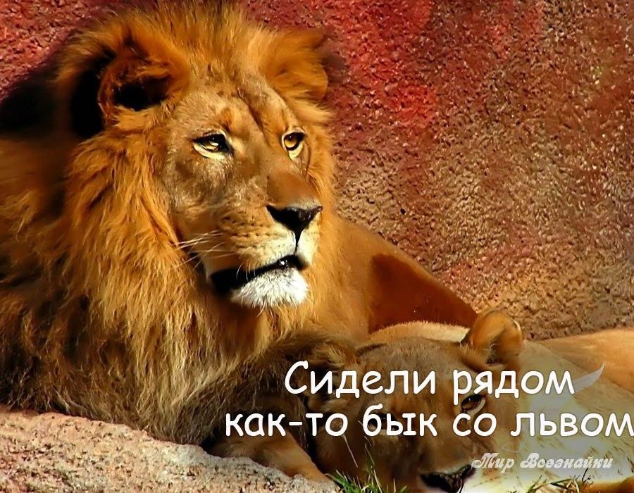 картинки лев с надписью мужики тогда и сейчач зачем