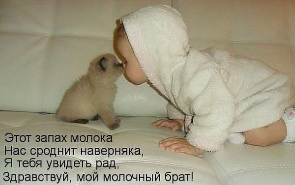 Без кота и жизнь не та - 6 апреля 2016 в 17:06