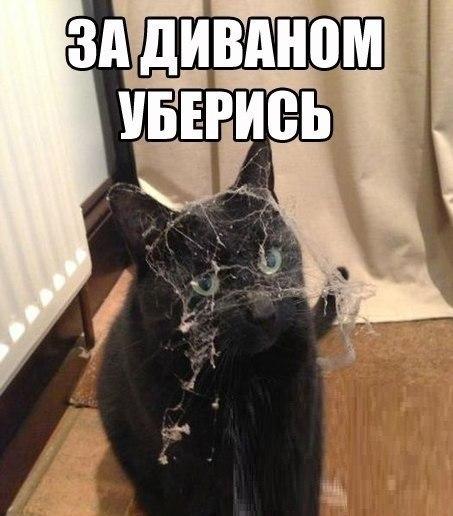 Без кота и жизнь не та - 6 апреля 2016 в 01:32