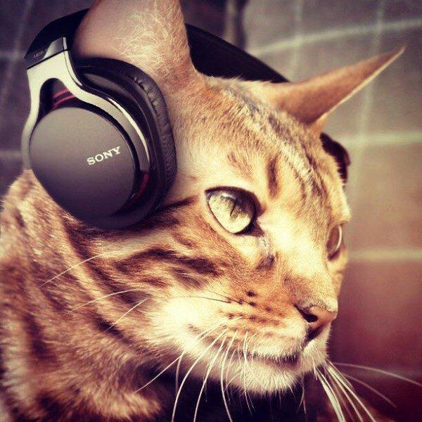 картинки котята в наушниках вельможные мещане