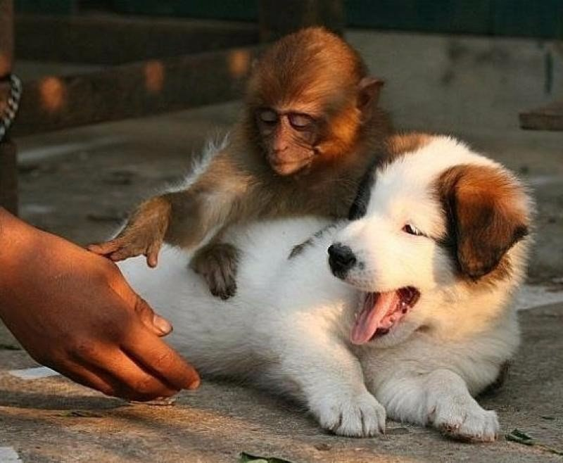 смешные картинки про собак и обезьян плитка кухне или