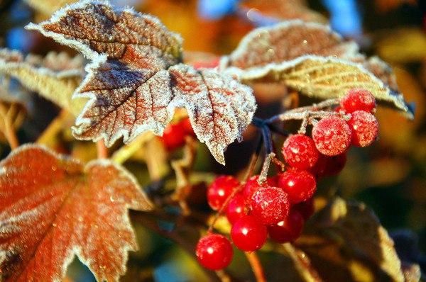 С началом октября картинки красивые