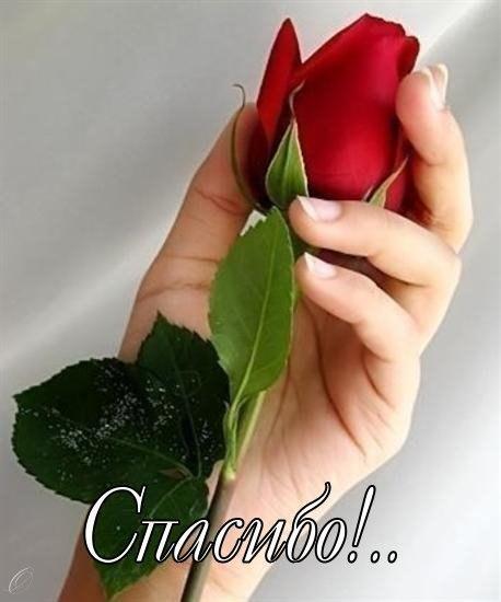 Днем, открытки спасибо с розой женщине