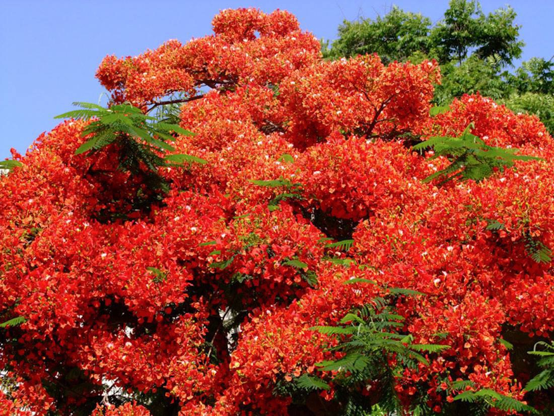 Экзотический фото цветок кустарник