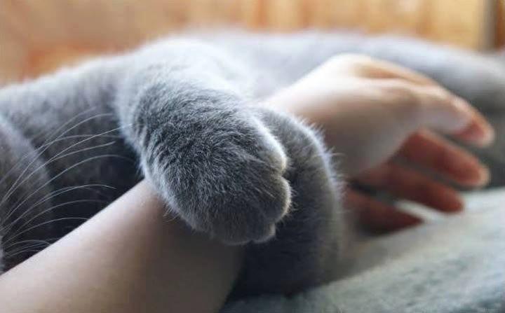 Если у вас есть кот, одиночество не так уж и страшно