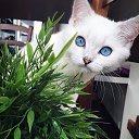 Фото Елена, Котово, 51 год - добавлено 6 октября 2016