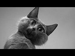 Приколы про животных. Смешные видео про котов и кошек