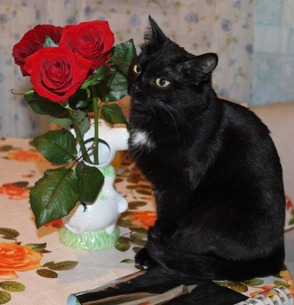 Картинки черные кошки в розах, маме днем рождения