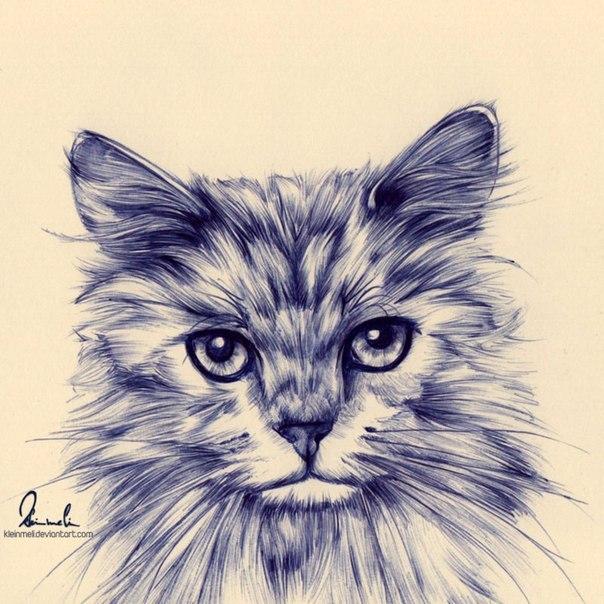 Картинки для срисовки смешные котики гелевой ручкой, маковеем