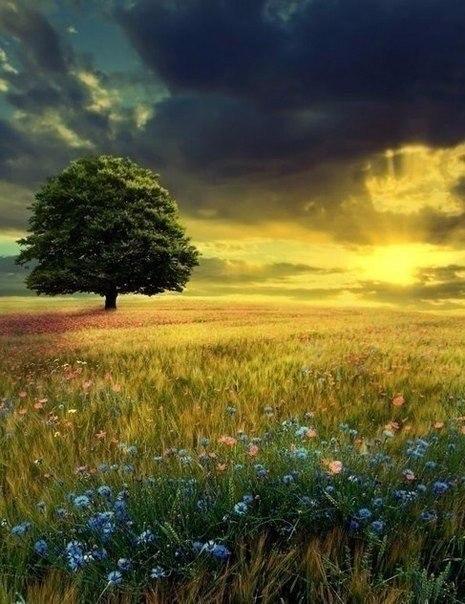 Главное жить. Главное любить. Главное верить..© Лев Толстой - 7